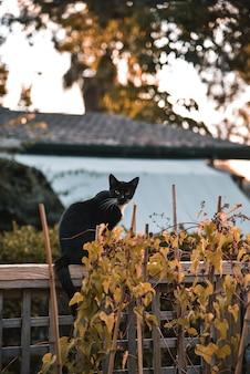Gato preto como um símbolo do halloween com abóbora laranja