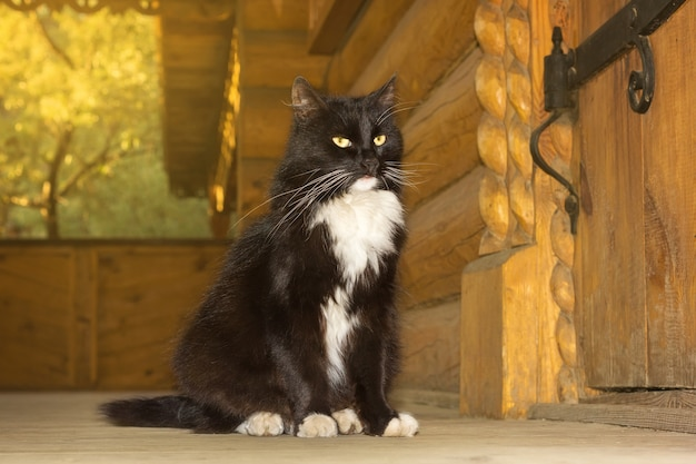 Gato preto de um conto de fadas