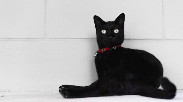 Gato preto deitado no chão.