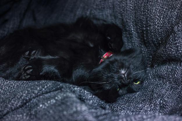 Gato preto dormir em colcha têxtil cinza
