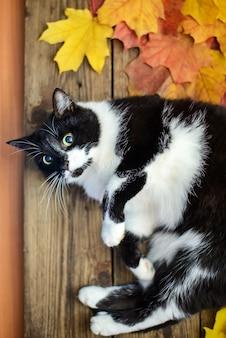 Gato preto e branco com folhas de outono