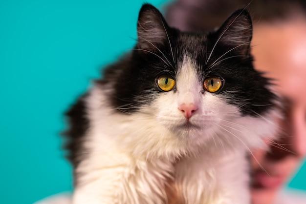 Gato preto e branco com olhos verde-amarelados