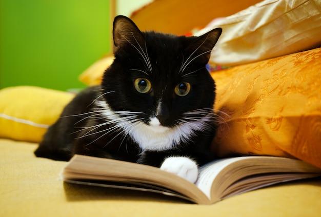 Gato preto e branco e livro aberto