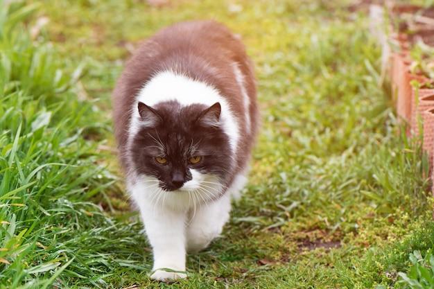 Gato preto e branco no jardim