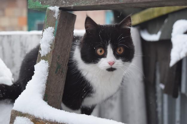 Gato preto e branco que anda na neve.