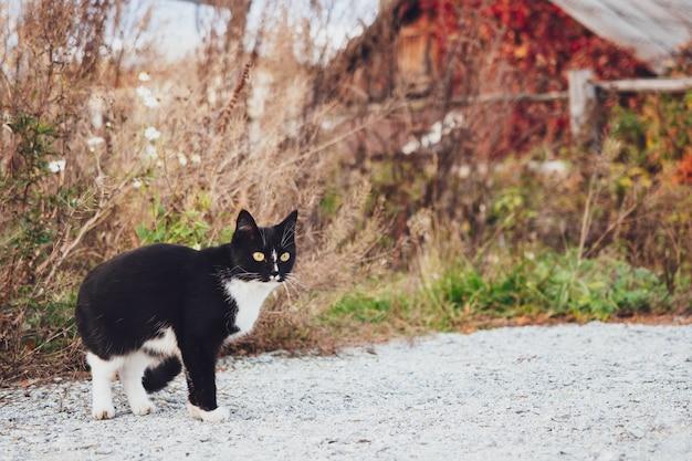 Gato preto e branco se esgueira na grama no fundo de uma casa de madeira, outono, vila