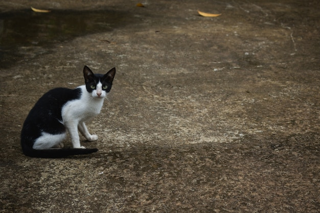 Gato preto e branco sentado na estrada