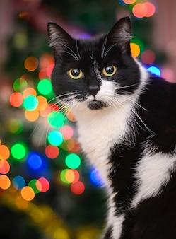 Gato preto e branco sobre as luzes coloridas de natal