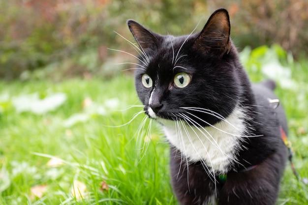 Gato preto e branco surpreso na grama verde
