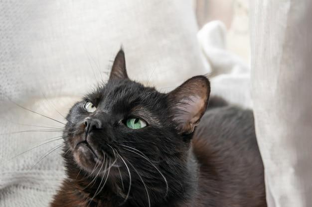 Gato preto encontra-se e olha em casa
