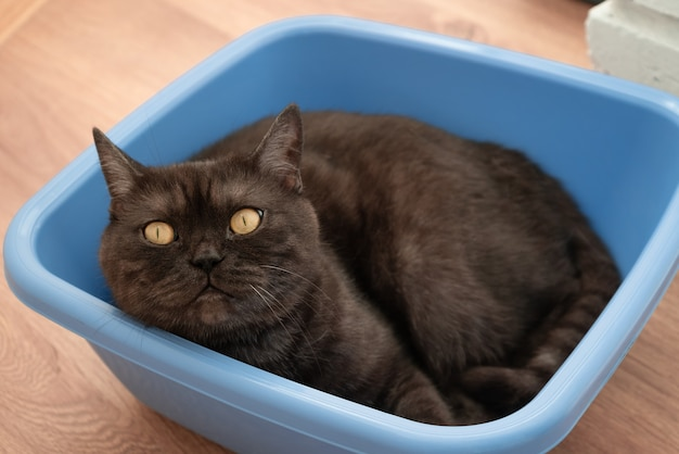 Gato preto engraçado subiu no cesto de roupa suja e descansou
