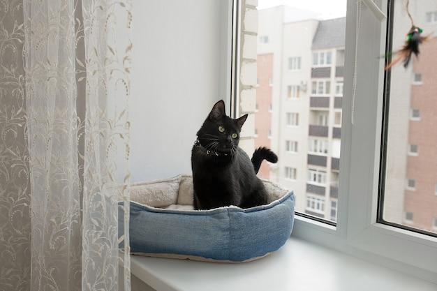 Gato preto está sentado na janela em seu berço