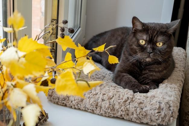 Gato preto fofo deitado no parapeito da janela ao lado de um buquê de folhas de outono amarelo