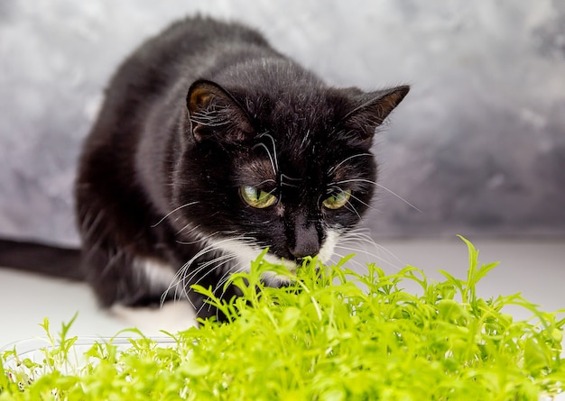 Gato preto fofo farejando pequenas plantas verdes