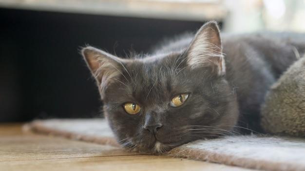 Gato preto que senta-se em uma tabela perto de uma janela.