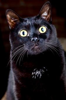 Gato preto sentado e olhando