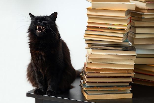Gato preto sentado na mesa ao lado de uma pilha de livros antigos.