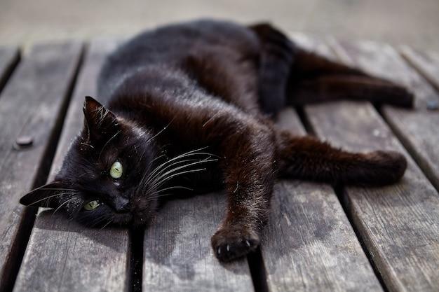 Gato preto vadio exangue descansando na mesa de ripas de madeira.