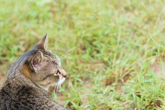 Gato que olha à grama verde no fundo da natureza.