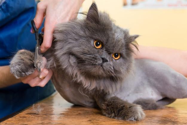 Gato que prepara no salão de beleza do animal de estimação.