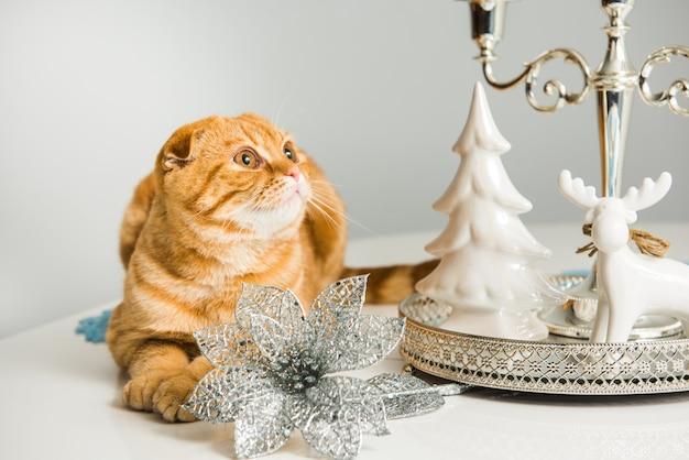 Gato red scottish fold com castiçal no feriado