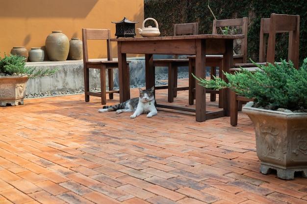 Gato refrigerado no fundo do chão de tijolo
