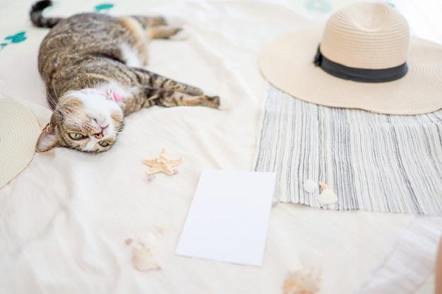 Gato relaxando nas férias na praia e no conceito de viagens