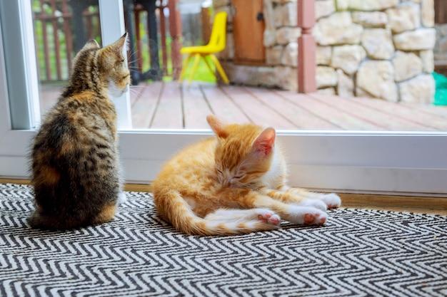 Gato relaxante e porta