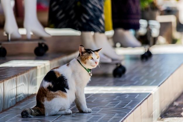 Gato relaxante perto de loja de tecidos