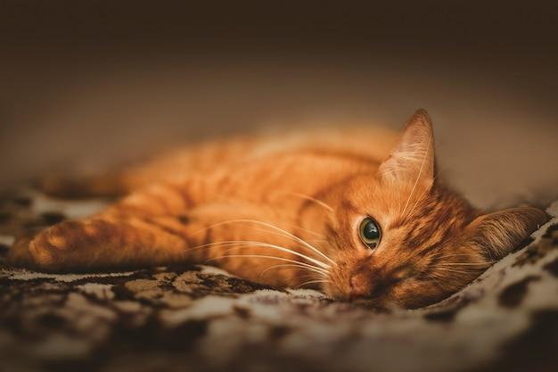 Gato ruivo adorável com um só olho
