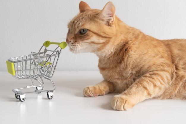 Gato ruivo com carrinho de compras em fundo branco, olhando com curiosidade