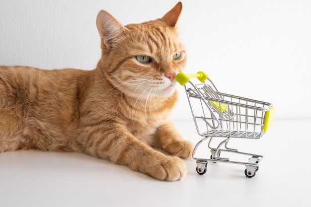 Gato ruivo com um carrinho de compras no fundo branco e um olhar curioso