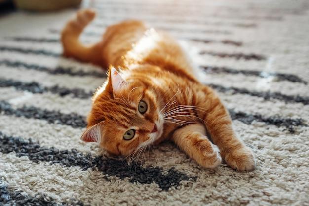 Gato ruivo deitado no tapete do chão em casa. animal de estimação brincando com tapete