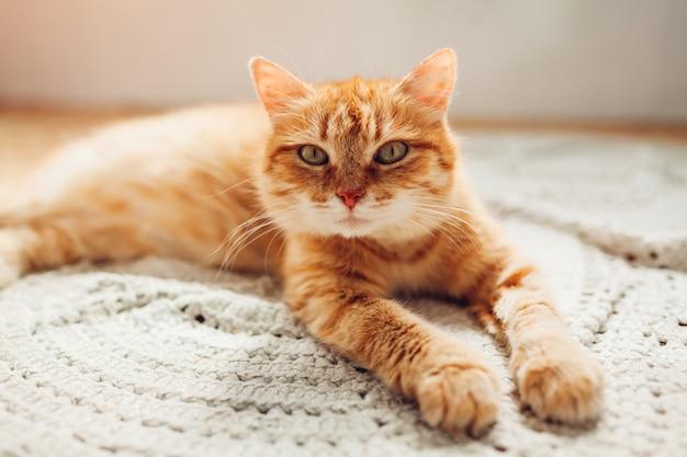 Gato ruivo deitado no tapete do chão em casa. pet relaxante e se sentindo confortável