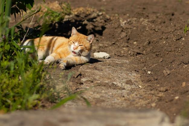 Gato ruivo descansando em um canteiro de flores verdes no verão gato ruivo doméstico