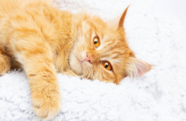 Gato ruivo dormindo na cama