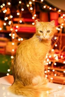 Gato ruivo em casa na época do natal