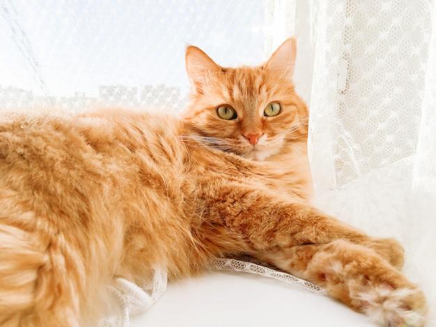 Gato ruivo fofo deitado no peitoril da janela com cortina de tule. animal de estimação fofo está olhando com curiosidade. dia de sol em casa aconchegante.