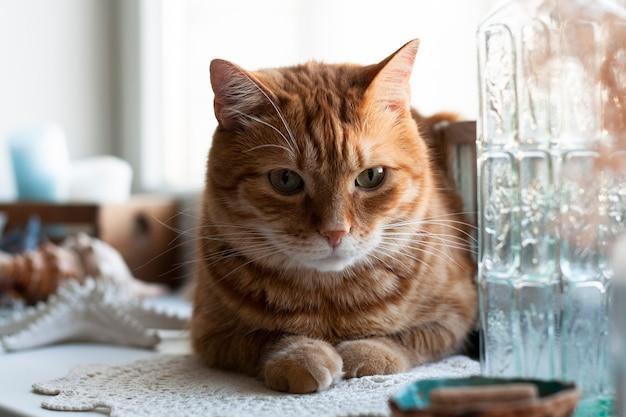 Gato ruivo fofo sentado em um peitoril da janela.