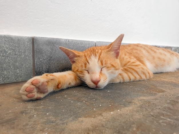 Gato ruivo relaxado dormindo docemente no chão de concreto, close-up