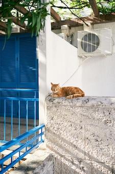 Gato ruivo sentado em uma cerca de pedra perto da casa