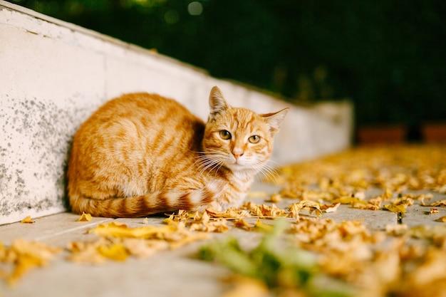 Gato ruivo sentado na estrada coberto de folhas amarelas