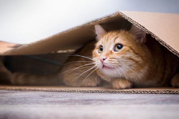 Gato ruivo sentado sob uma caixa de papelão