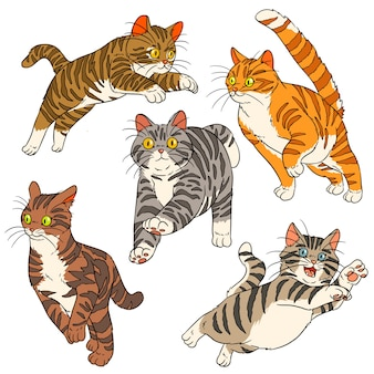 Gato saltitante