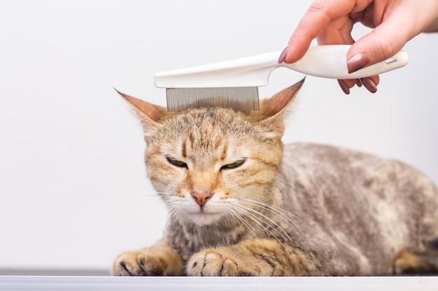 Gato satisfeito no salão de beleza para animais de estimação cuidando de gatos em um salão de beleza para animais de estimação