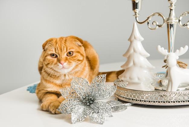 Gato scottish fold vermelho com castiçal em um fundo branco nas férias. gato e etiqueta.