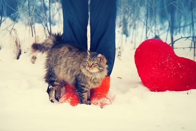 Gato se esfregando nas pernas femininas na neve