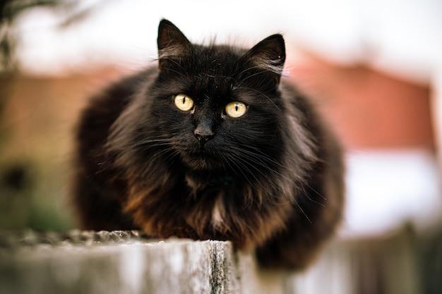 Gato selvagem preto com olhos verdes e fundo desfocado
