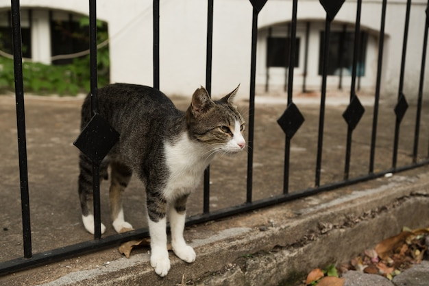 Gato sem teto na rua. gato de retrato de close-up. cara de gato bonito.