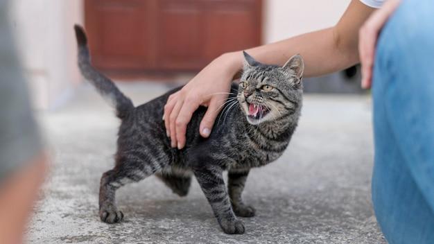 Gato sendo acariciado por alguém de fora